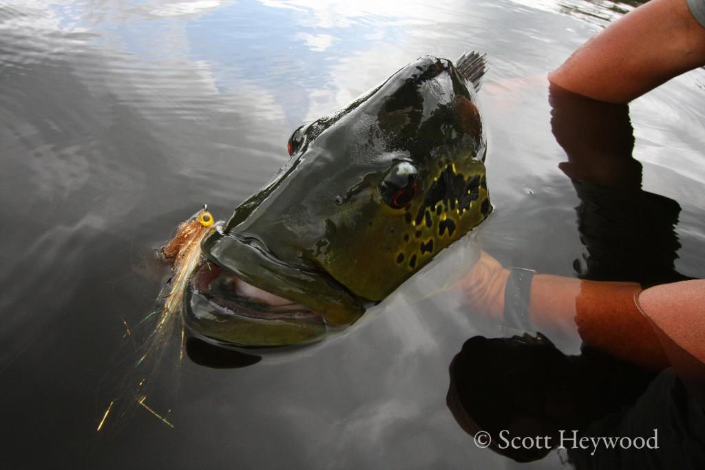 рыбалка на монстров в реках