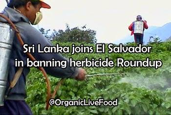http://2.bp.blogspot.com/-tdbunw56ZrQ/UzGpdxejAwI/AAAAAAAASsA/7-YfzqSPfAI/s1600/Sri-Lanka-joins-El-Salvador-in-banning-herbicide-Roundup-linked-to-chronic-kidney-disease.jpg