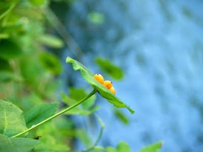 Torrente savena: fatta su un fiore