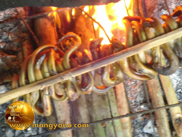 FOTO: Panggang belut diatas bara api. Belut yang sudah dibakar matang berwarna kekuningan dan baunya harum.