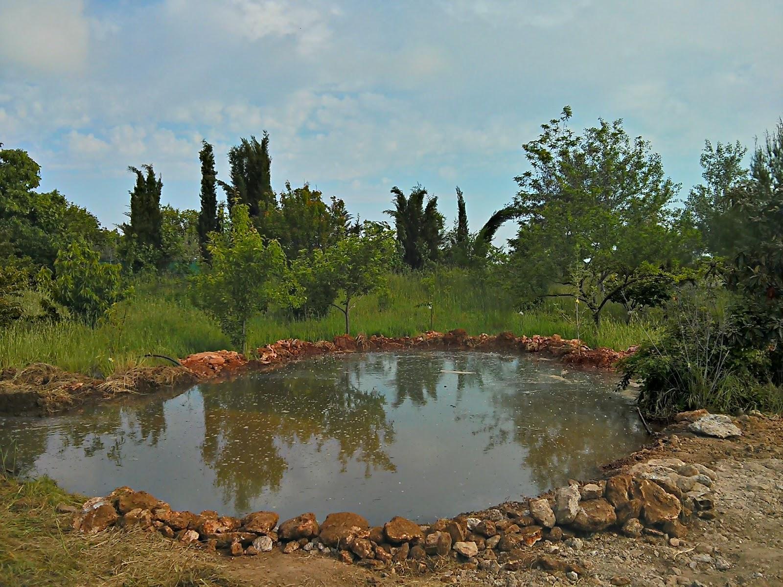 Corral para gallinas y patos taringa for Como construir un lago para peces