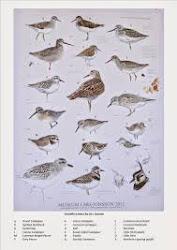 Birds ID