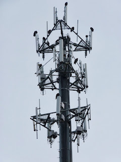 on the cellphone tower
