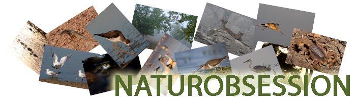 naturobsession
