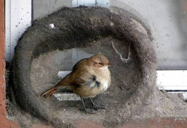 Bird Nest Construction