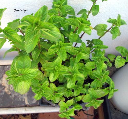 Plantas para el cuarto de bano cuidar de tus plantas es - Plantas para habitacion ...