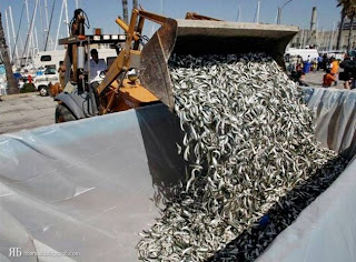 Mass fish death in California after Japan T-sunami