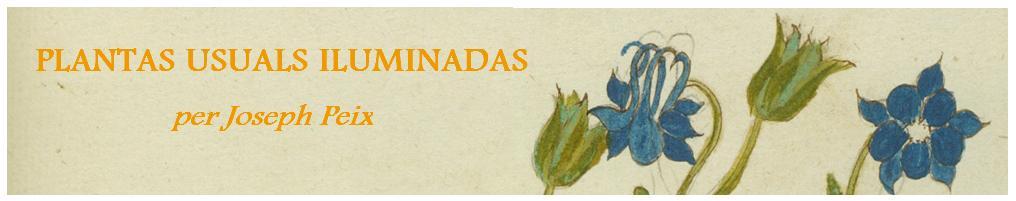 PLANTAS USUALS ILUMINADAS