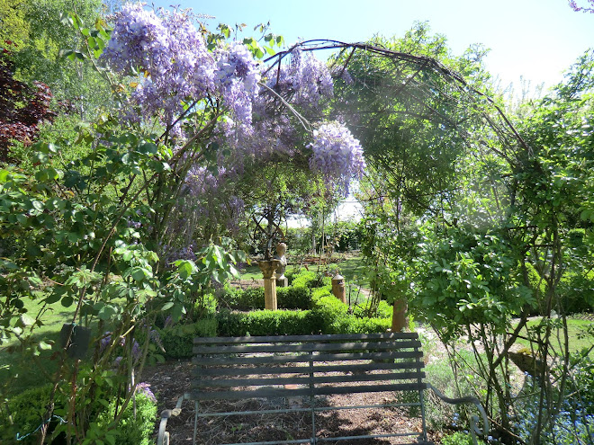 glycine sur pergola de roses