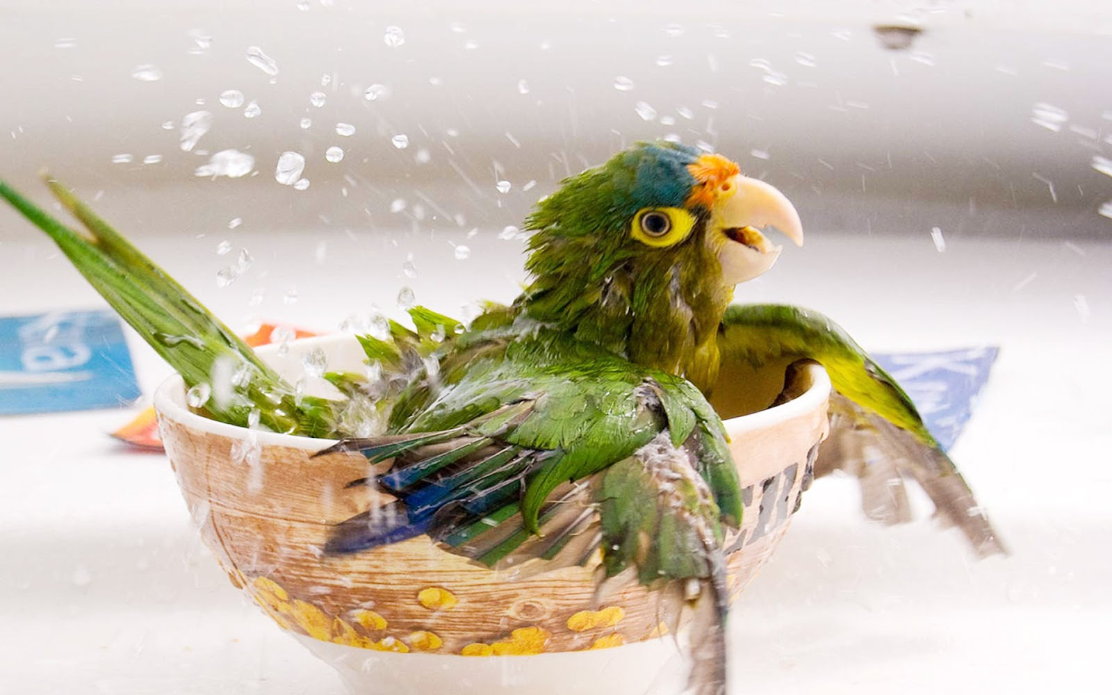 Lovely Wallpapers: Little Cute Animals Wallpapers 2013
