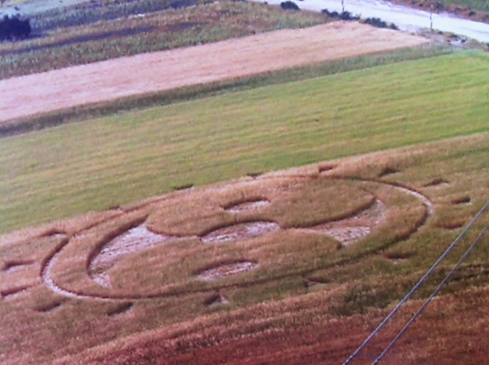 Crop Circles 2012 - Página 11 IMG_0793