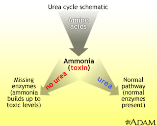 Can A Person Have A Build Up Of Ammonia