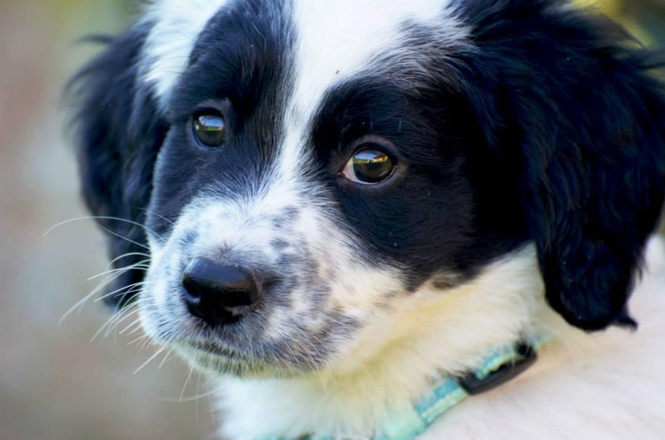 Velletri life canile pieno l 39 allarme dell 39 associazione - Portare il cane al canile ...