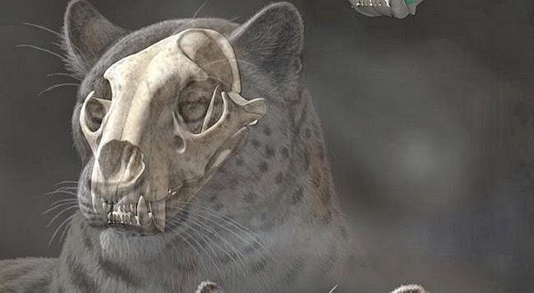 Fosil Kucing Raksasa ini Hebohkan Ilmuwan