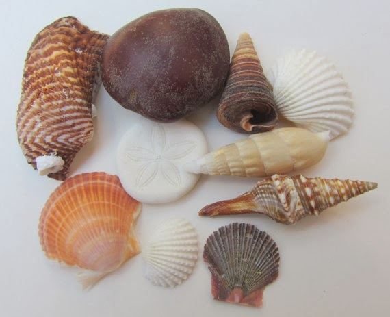 CereusArt Coastal Decor Decorate With Seashells From