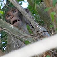 loose monkey