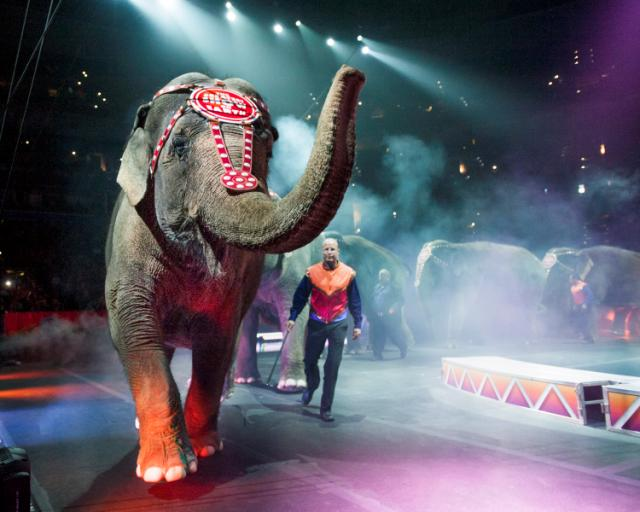 @ringlingbros @toddlertrails