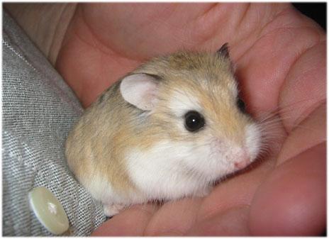 Will add hamster.com