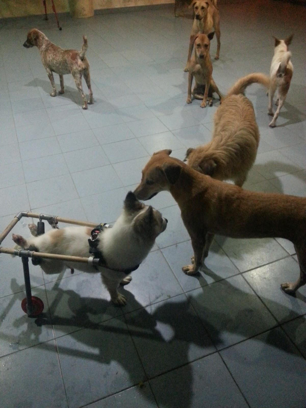 Hope Dog Rescue Malaysia
