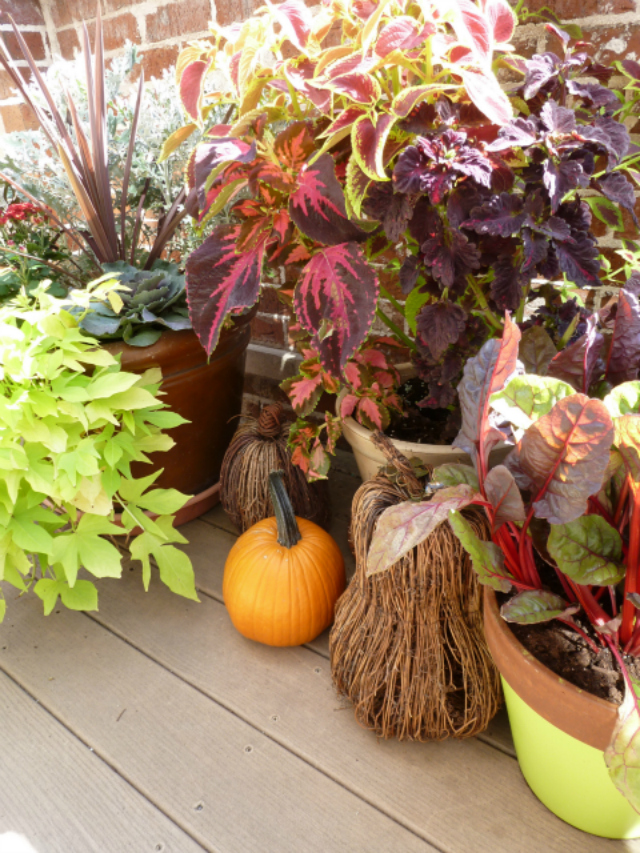 How to Transform Your Container Garden for Fall Design