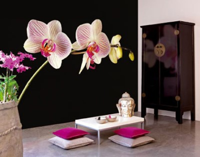 Black Orchid Wallpaper