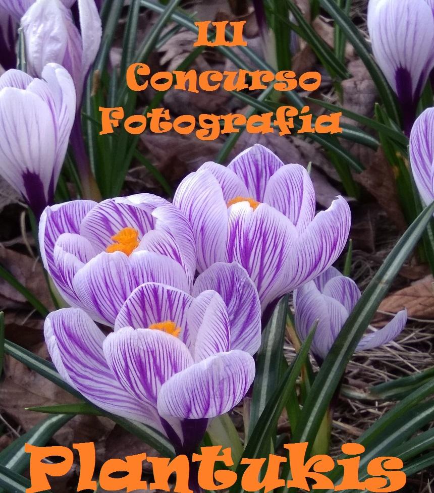 III CONCURSO FOTOGRAFÍA