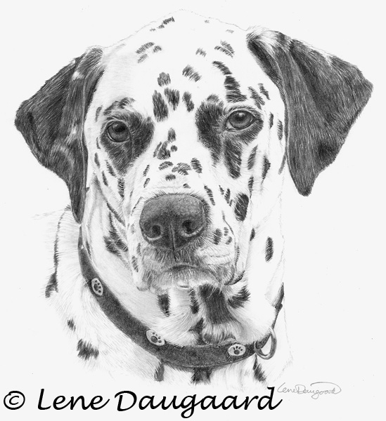 how to draw a dog dalmatian