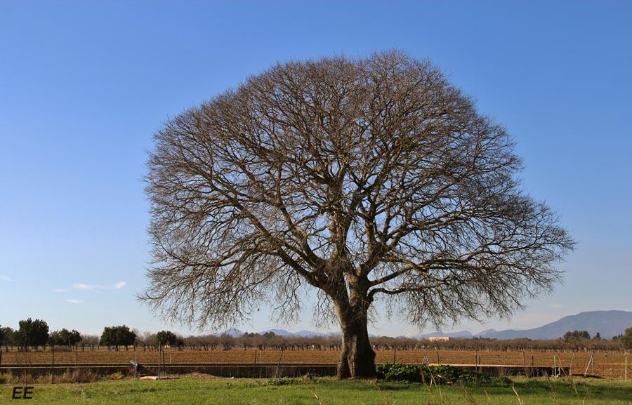 Cuadros de arboles en invierne imagui for Arboles en invierno
