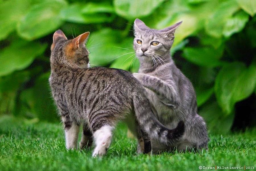 Gambar Kucing Lucu ku
