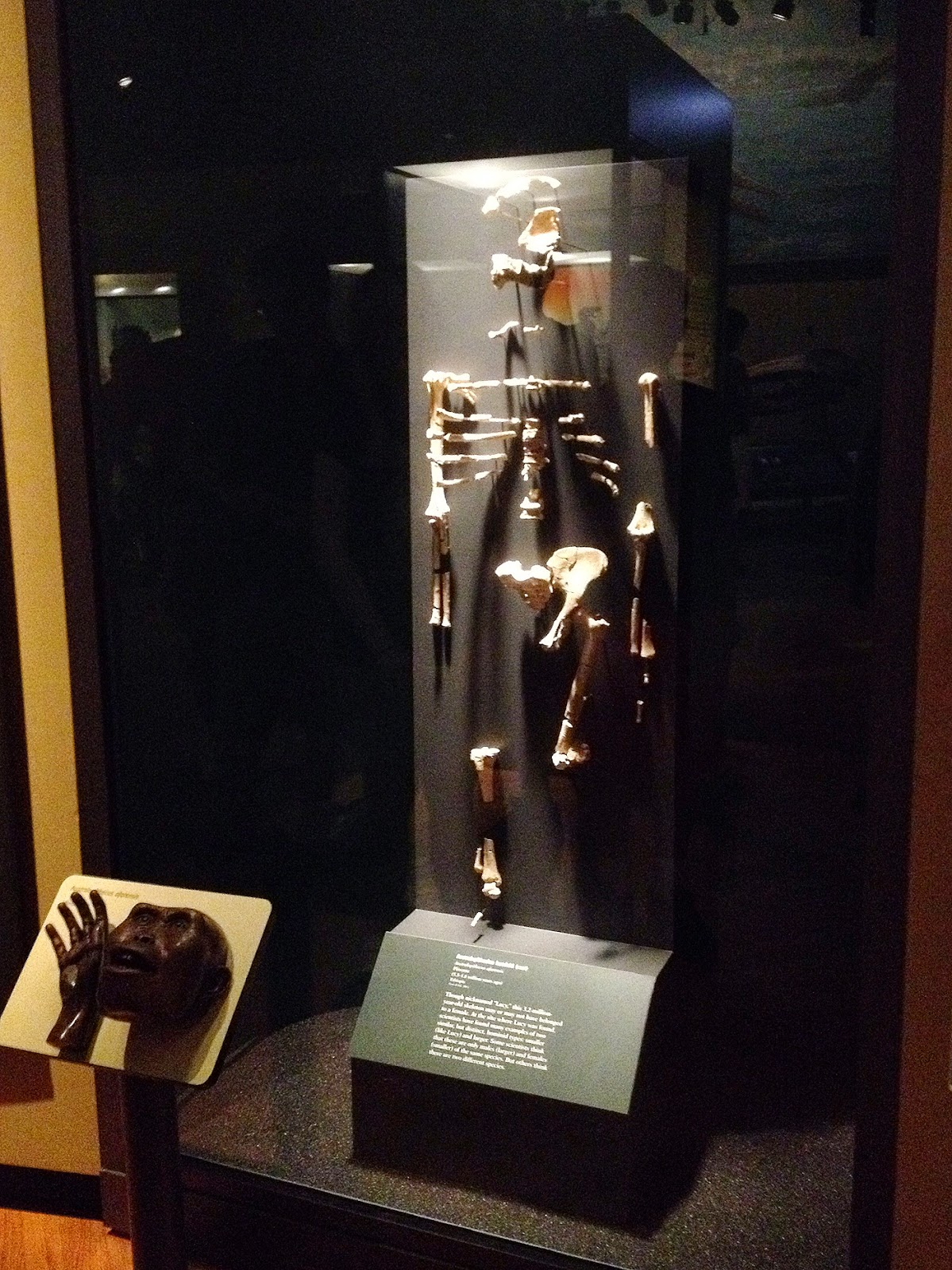museum, Chicago, Field Museum, Lucy, hominid, fossil