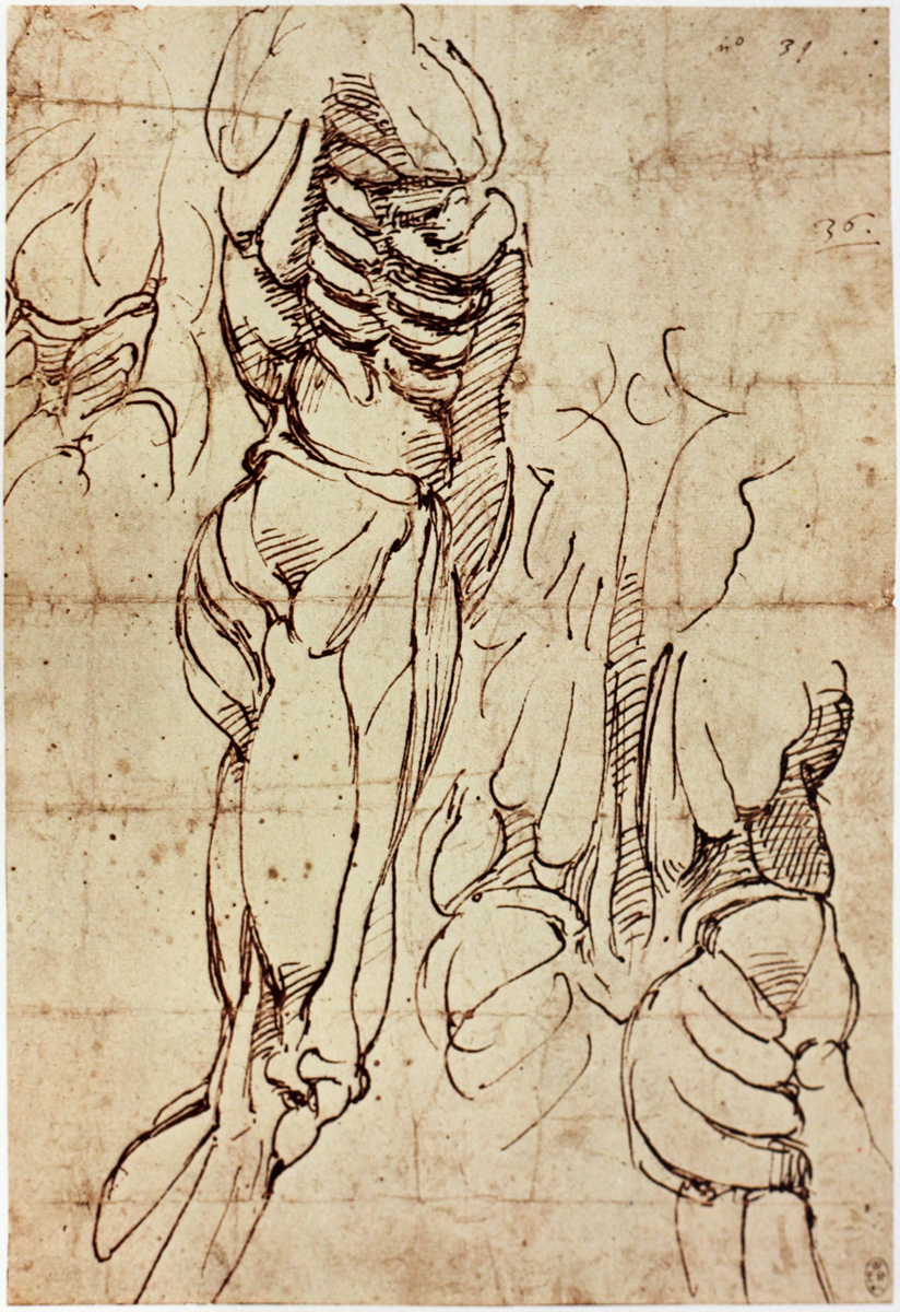 The Classical Pulse: Michelangelo: Anatomy Studies