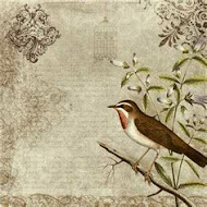 Birdie's Images