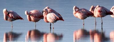 Belle Couverture Facebook en HD Flamants
