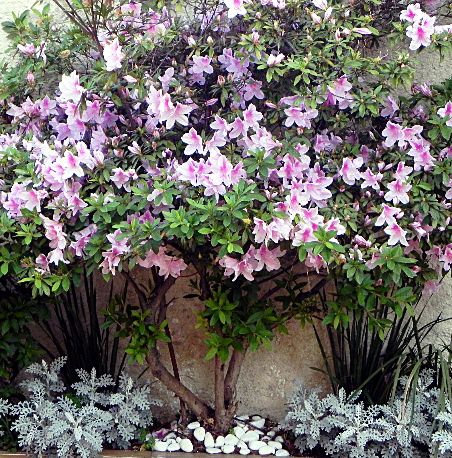 flores de jardim para todo o ano