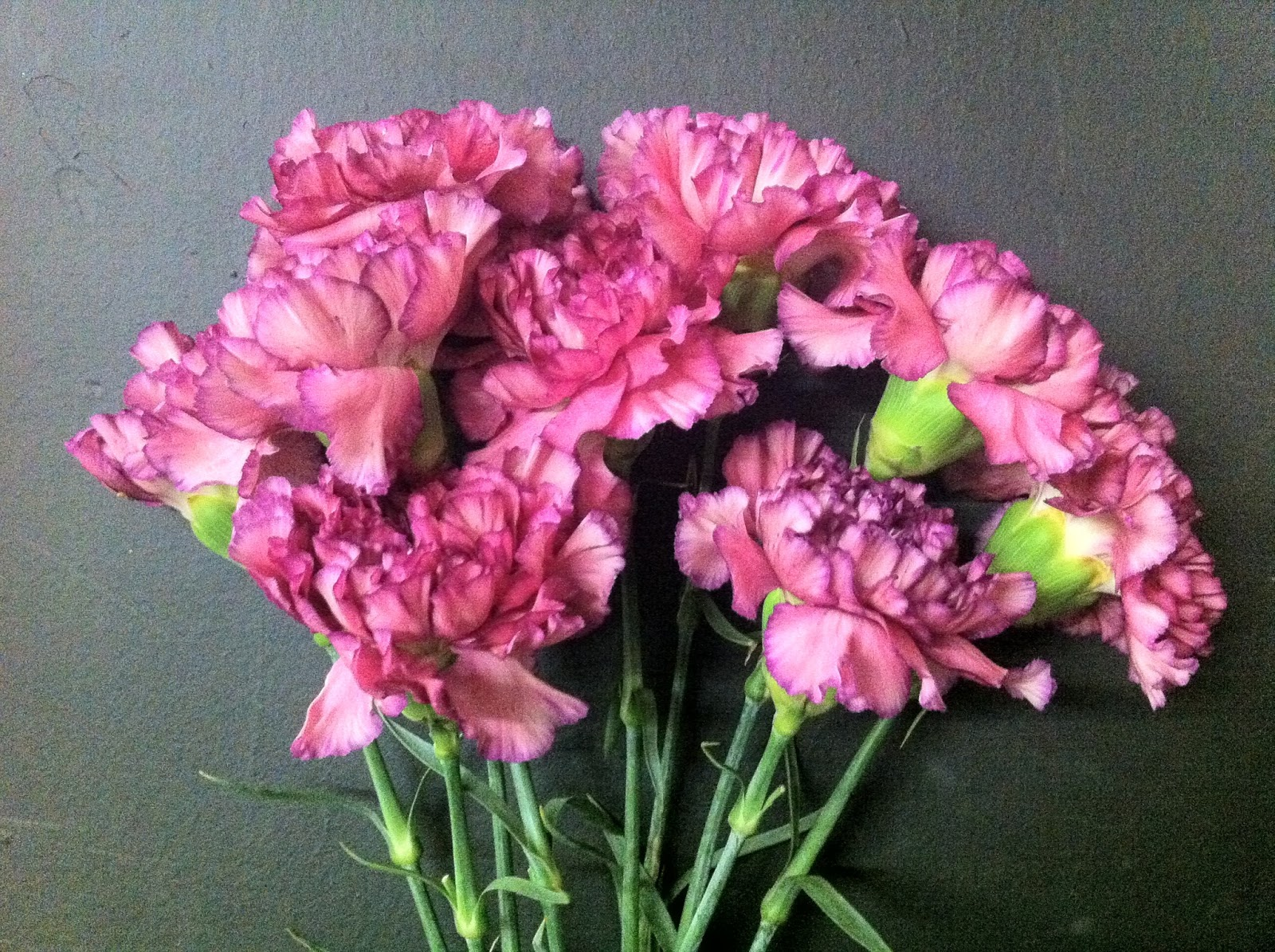 The enchanted petal carnations day biocorpaavc