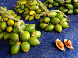 biji buah pinang