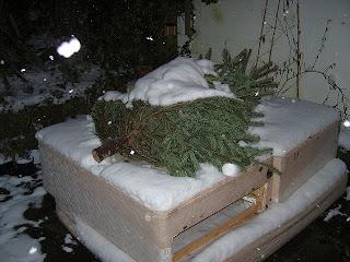 sad dead christmas tree seazed under snow
