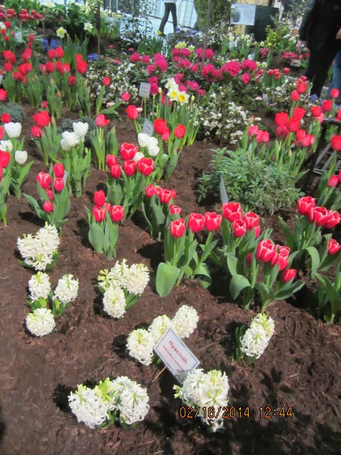 ... Displays Contain Plants That Are Very Common    Daffodils, Tulips,  Irises, Hyacinths    The Typical Bulb Or Flowers That One Sees In NJ Home  Gardens.