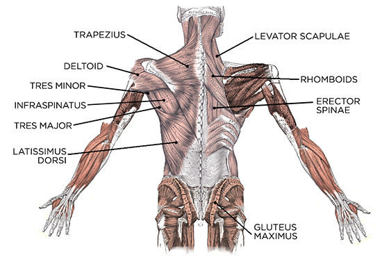 Lats Muscle Pain