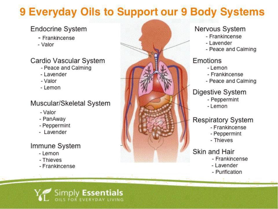 oils and the human body essay