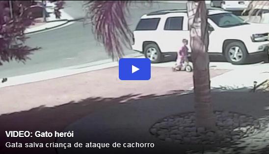 Câmeras gravam gato salvando criança de ataque de cachorro