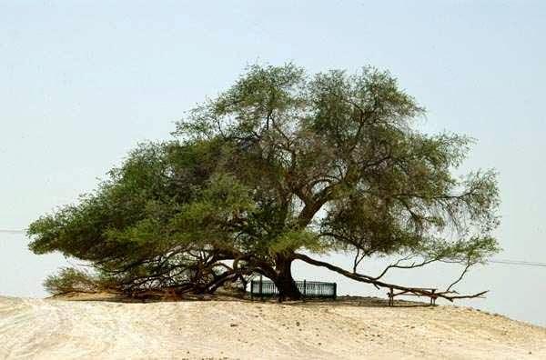 5 Pohon Aneh Yang Tumbuh di Bumi