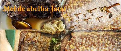 Quer comprar mel de abelha Jataí?