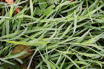 Closeup view of the grass frosted by an autumn morning