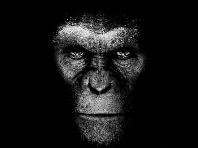 El planeta de los simios (R) evolución fondo para celulares