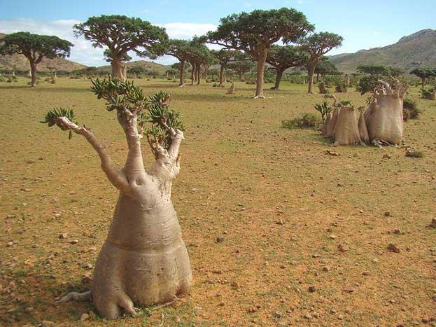 World Heritage Socotra Archipelago