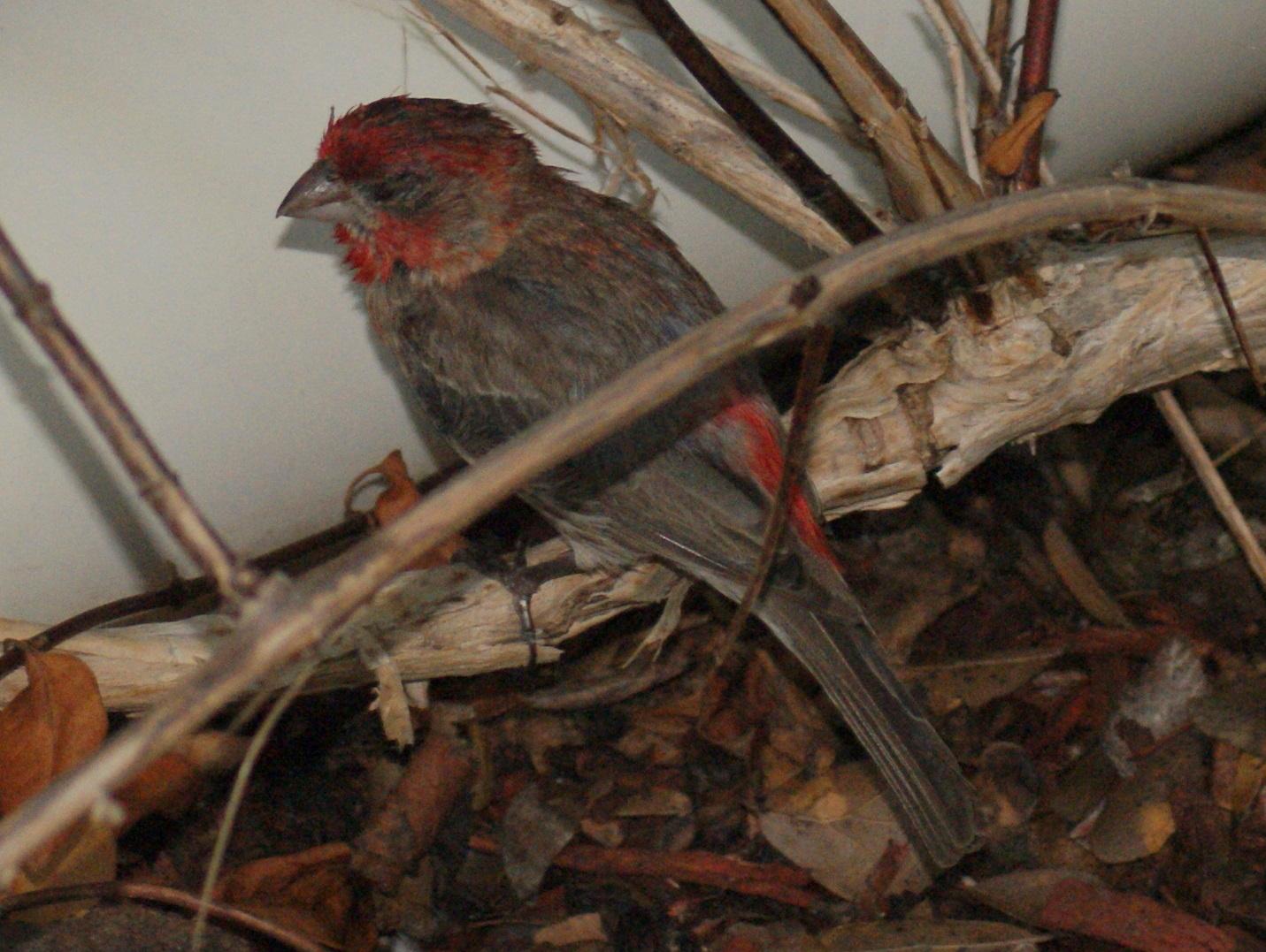 Se Texas Birding Amp Wildlife Watching Heartbreaking