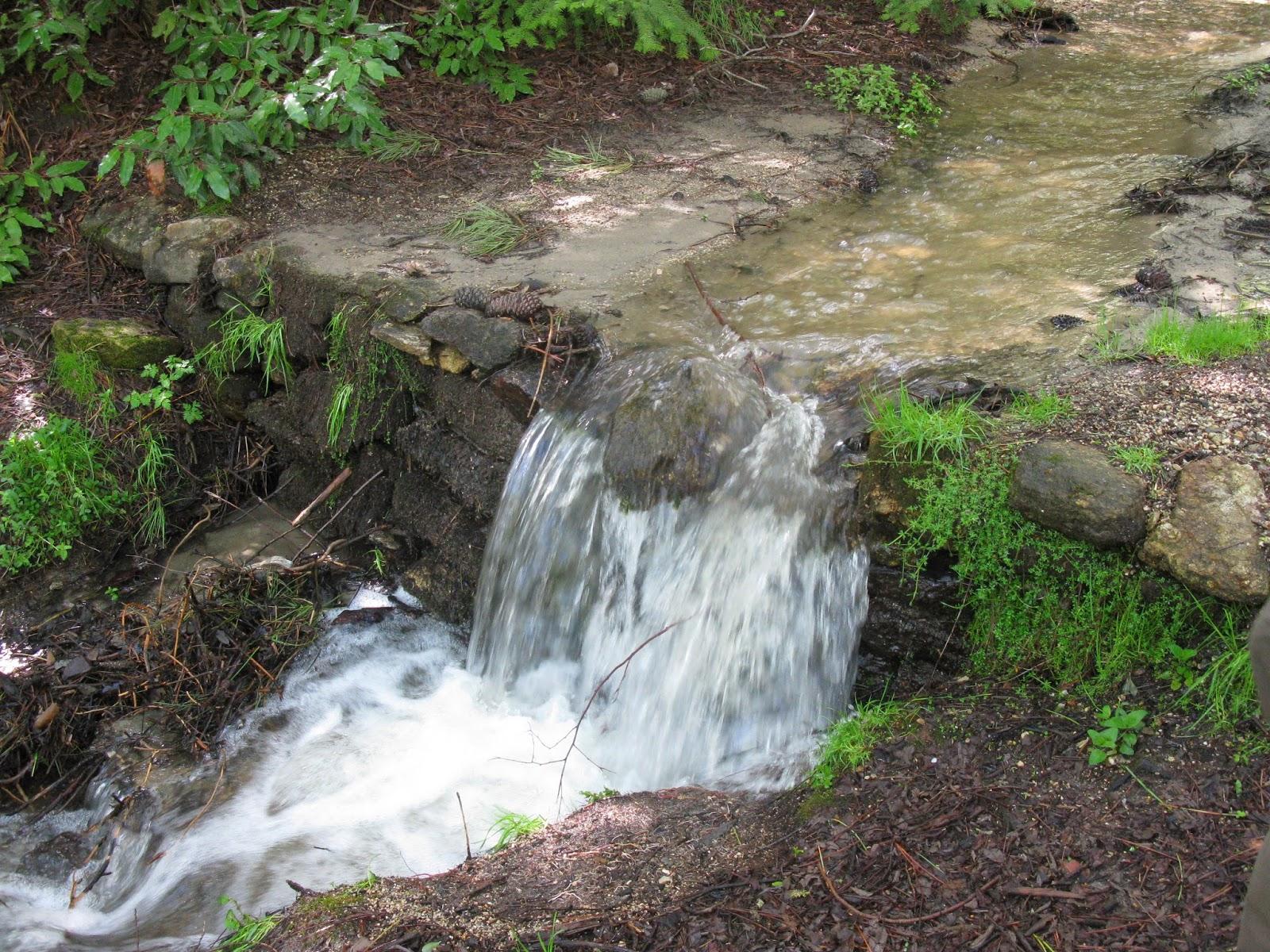 Arroyo del Arca del Helechal - Día Mundial del Agua