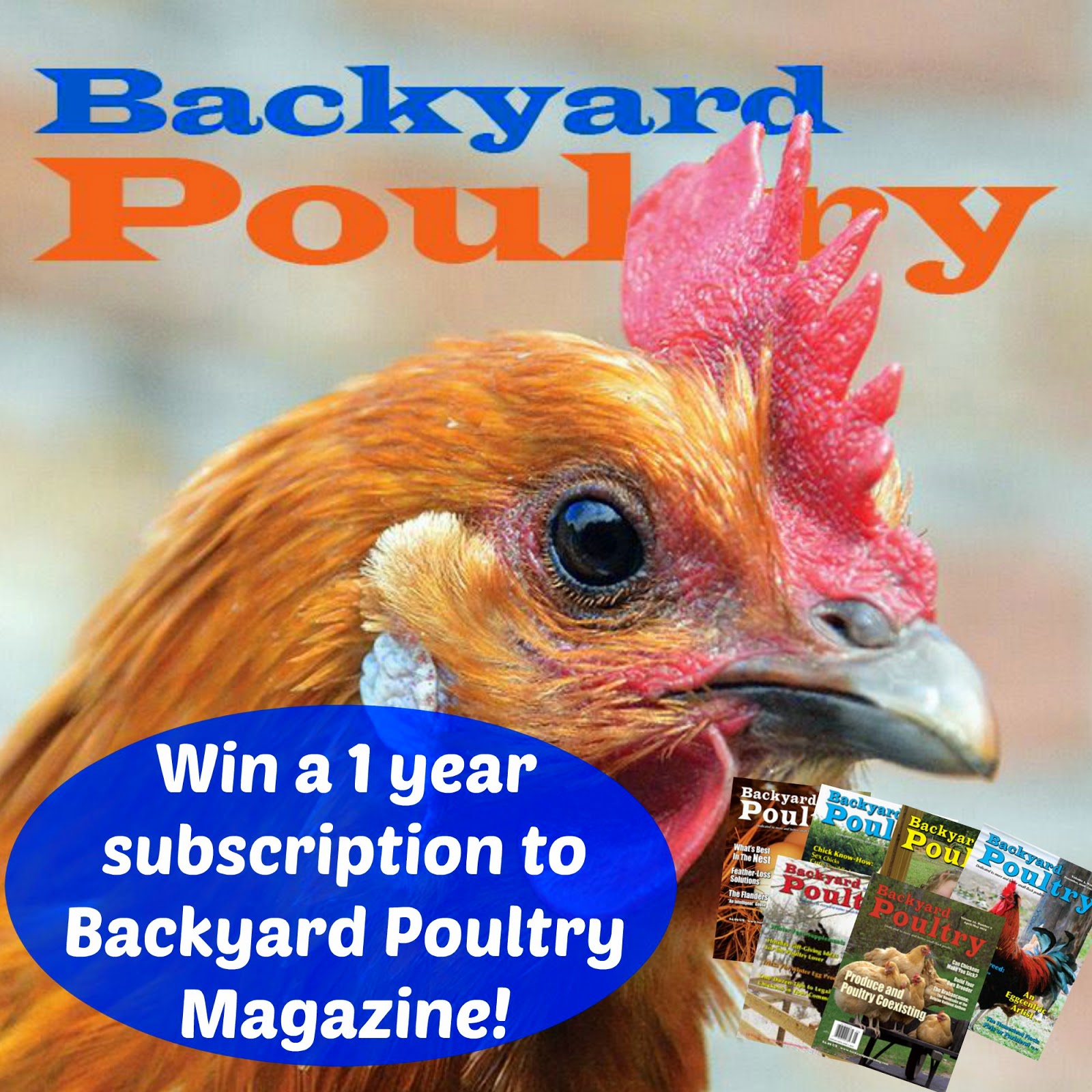 of a born again farm girl backyard poultry magazine giveaway