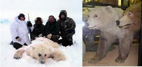 hybrid animal - grolar bear